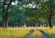 Oak grove Stock Photos