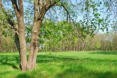 Oak grove Stock Photo