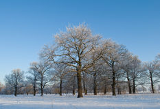Oak grove Stock Image