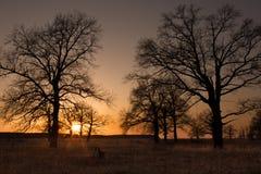 Oak grove Stock Photography