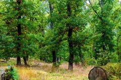 oak grove in autumn in Bulgaria Stock Photos