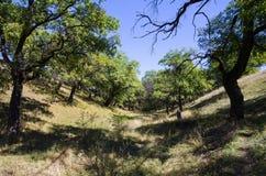 Oak Grove nel fascio Fotografie Stock