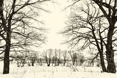 Oak grove in winter. all in the snow Stock Images