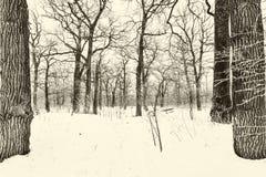 Oak grove in winter. all in the snow stock image