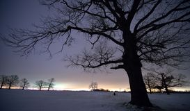 Oak Grove on a winter night Royalty Free Stock Photo