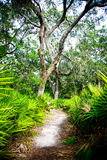 Oak Hammock- Path Through Tropical Paradise Stock Photography