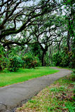 Oak hammock walkway Stock Images