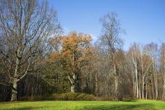 Oak hideaway autumn day. Trigorskoye, Pushkinskiye Gory Royalty Free Stock Images