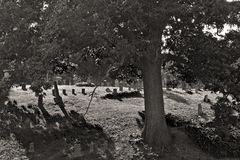 Oak Hill Cemetery Royalty Free Stock Images