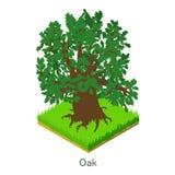 Oak icon, isometric style. Oak icon. Isometric illustration of oak vector icon for web Royalty Free Stock Photo
