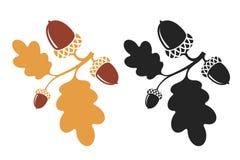 oak Isolerad filial med ekollonar och sidor stock illustrationer