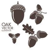 oak Isolerade ekollonar på vit bakgrund royaltyfri illustrationer