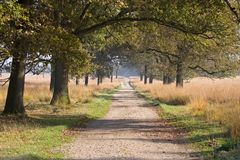 Oak lane in the forest Royalty Free Stock Photography
