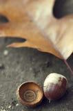 Oak leaf and acorn Royalty Free Stock Image
