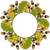 Oak leaf and acorn in color, liner, round frame 3 Royalty Free Stock Images