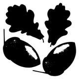 Oak leaf, acorn and branch isolated silhouette, ecology stylized. Ecology stylized vector illustration. Oak leaf, acorn and branch isolated silhouette. Eco Stock Image