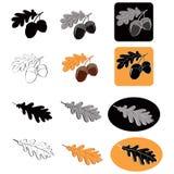 Oak leaf and acorns Royalty Free Stock Images