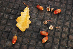 Oak leaf and acorns Royalty Free Stock Image