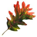 Oak leaf as an autumn symbol Stock Photos