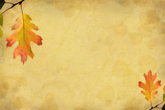 Oak Leaf Background Royalty Free Stock Photo