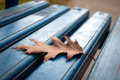 Oak leaf on bench Royalty Free Stock Image