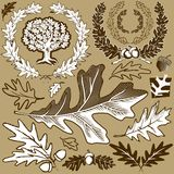 Oak Leaf Collection Royalty Free Stock Photography