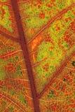 Oak Leaf Detail Royalty Free Stock Photography