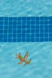 Oak Leaf Floating in Pool Stock Image