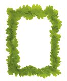 Oak leaf Frame. With space for text or what you need royalty free stock image