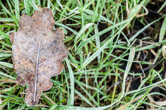 Oak leaf in frost Royalty Free Stock Photos