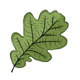 Oak leaf green, sketch for your design Royalty Free Stock Photo