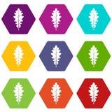 Oak leaf icon set color hexahedron. Oak leaf icon set many color hexahedron isolated on white vector illustration Stock Images
