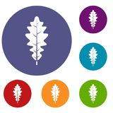 Oak leaf icons set. In flat circle red, blue and green color for web Vector Illustration