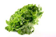 Oak leaf lettuce. A head oak leaf lettuce on a white background royalty free stock images