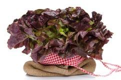 Oak leaf lettuce on a burlap bag Royalty Free Stock Photography