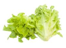 Fresh oak Leaf Lettuce. Oak Leaf Lettuce isolated over white background Royalty Free Stock Images