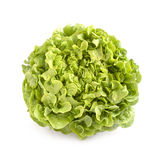 Oak leaf lettuce isolated. On white background Royalty Free Stock Images