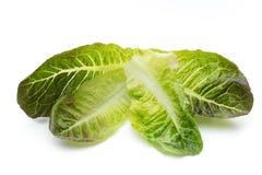 Oak Leaf lettuce isolated on white background. Stock Photography