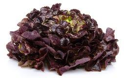 Oak leaf lettuce Royalty Free Stock Image