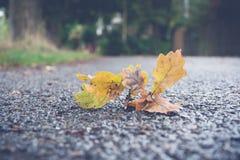 Oak leaf on a road Royalty Free Stock Photo