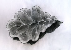 Oak leaf - sketch Stock Image