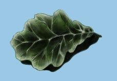 Oak leaf - sketch Stock Photography