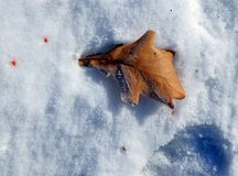 Oak leaf on snow covered with frost Royalty Free Stock Photos
