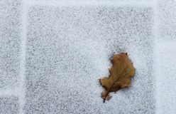 Oak leaf on a snow royalty free stock photo