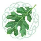 Oak leaf in summer coloring and Celtic magic ornament. Isolated on white, vector illustration Royalty Free Stock Image