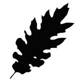 Oak leaf (vector) Royalty Free Stock Photos