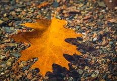 Oak leaf in water Royalty Free Stock Photo