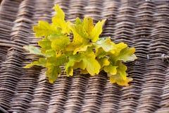 Oak leaf on wicker background Stock Photo