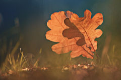 Oak leafes at autumn  forest Royalty Free Stock Photos