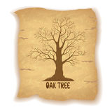 Oak Leafless Tree on Old Paper Royalty Free Stock Photos